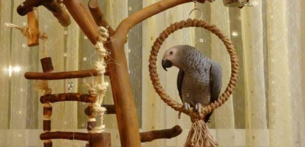Гойдалки для папуги