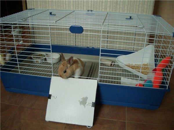 Карликовий кролик в клітці