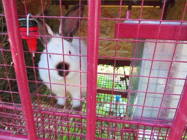 Металева клітка для кролика