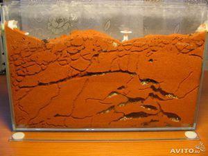 Ako si vyrobiť farmu pre mravce doma