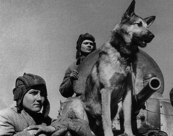 Собаки-диверсанти за часів ВВВ