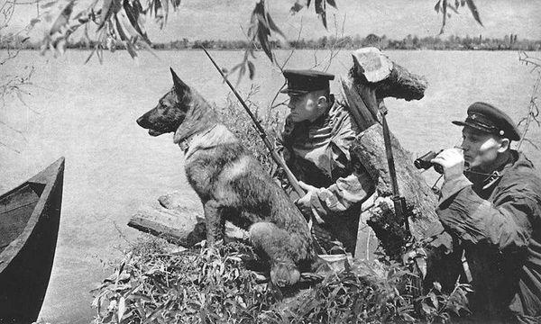 Собака-сапер за часів ВВВ