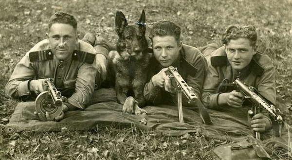 Сторожові собаки за часів ВВВ