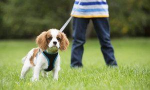 Як привчити собаку ходити на вулицю в туалет