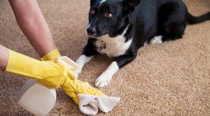 Чому собака пісяє будинку