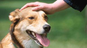 Привчання собаки до туалету через похвалу