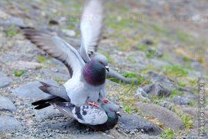 Як розмножуються птиці