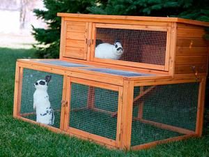 Як доглядати за декоративним кроликом