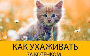 Догляд за маленьким кошеням