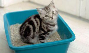 Кошеня сидить в лотку