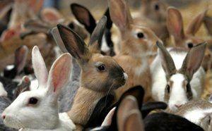 Як доглядати за кроликами: опис і особливості догляду