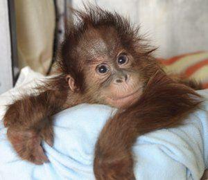 Как да се грижим за маймуни у дома?