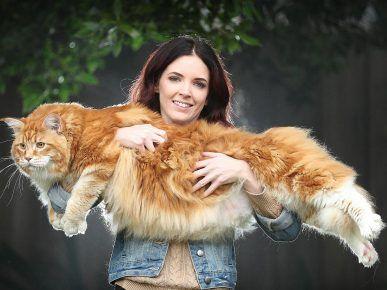 Найдовший кіт у світі
