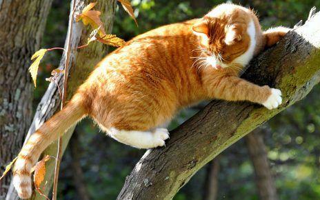 Кот на дереві