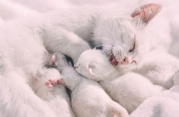 Кішка і новонароджені кошенята