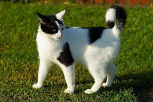 кішка сердиться