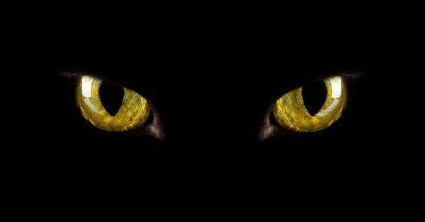 Зелені котячі очі