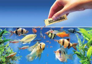Ako si vybrať a ako dávať rybám suché krmivo