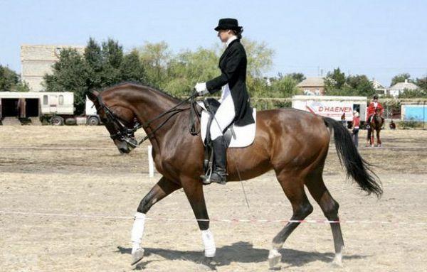 Кінь для верхової їзди