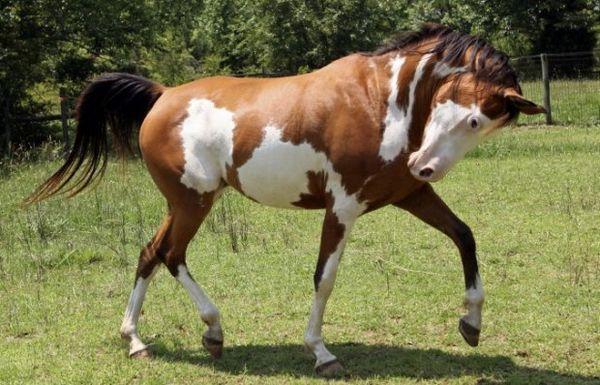хода коні