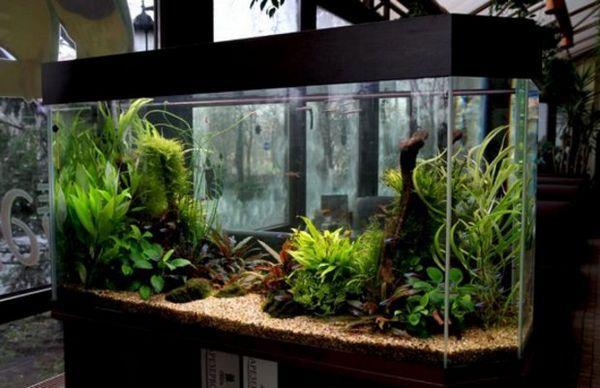 обігрівач для акваріума