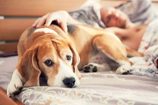 Собака на ліжку