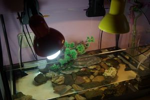 Уф лампи для черепахи