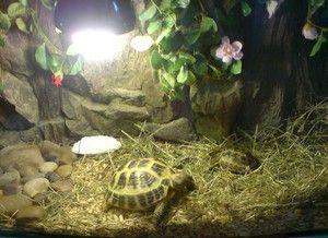 Поради для бажаючих доглядати за красноухой черепахою