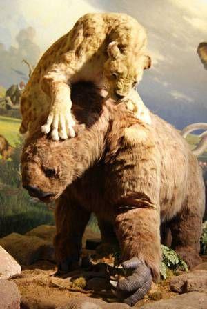 Ako vyzeral starodávny šabľozubý tiger