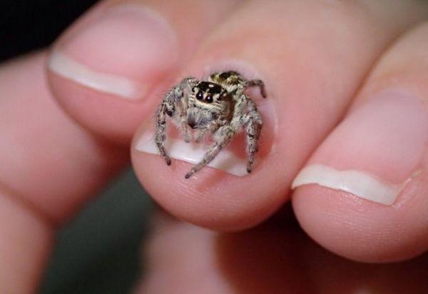 укус павука