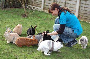 Рекомендації досвідчених кролівників для годування і вирощування кроленят