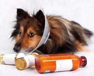 Як вилікувати собачий бурсит ліктьового суглоба