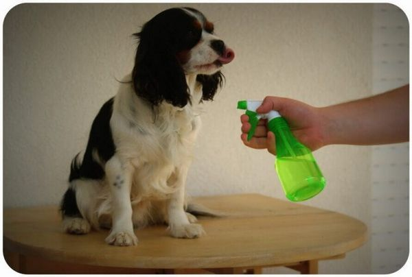 Обробка собаки акарицидну засобом