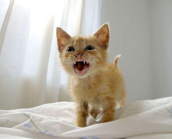 стрес у кішки