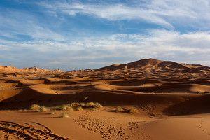 Пустеля дуже сильно заселена, хоч багато хто про це і не знають