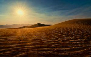 Тварини в пустелі активність проявляють вночі і вранці