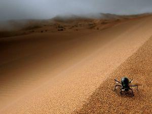 Комах в пустелі багато
