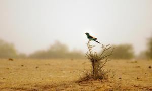 Птахи в пустелі також пристосувалися до особливому клімату