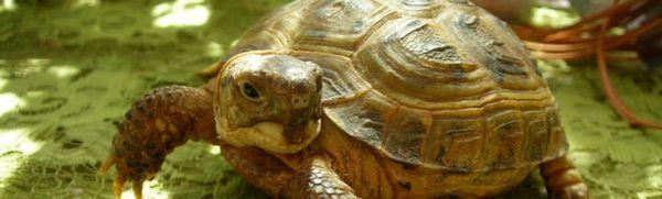 Ako pomenovať korytnačku zvučným a originálnym spôsobom