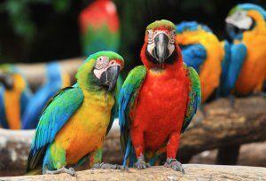 Кои са най-интелигентните папагали