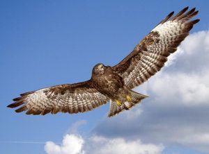 Aké sú najrýchlejšie vtáky na planéte