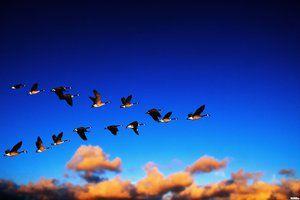 Ktoré vtáky letia najskôr na juh