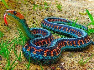 Aké druhy hadov tam sú