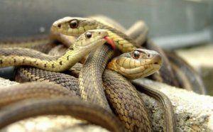 Кои са най-опасните змии в африка