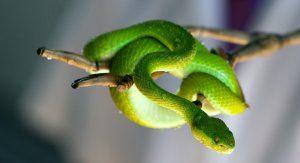 Какви змии се срещат в тайланд