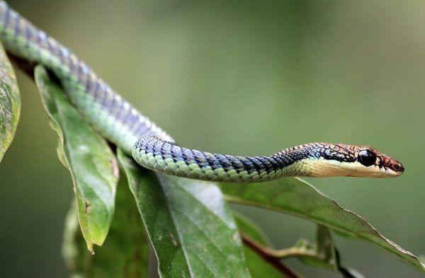 Lietajúci had