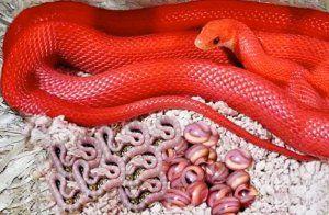 По какви начини змиите раждат потомството си?