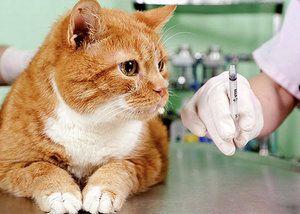 Кантарія для кішок