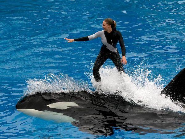 Obyvateľ mora zabijácka veľryba