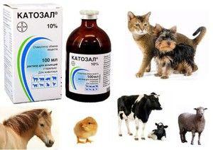 Catosal pre zvieratá - návod na použitie lieku